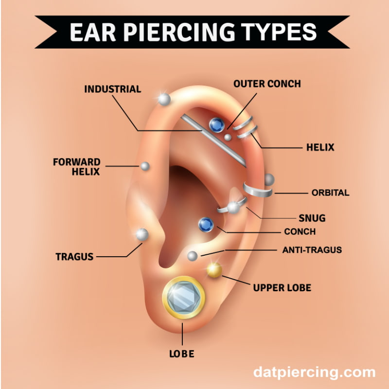 Ear Piercing Diagram Pain.The Different Types Of Ear Piercing And Their Names Dat